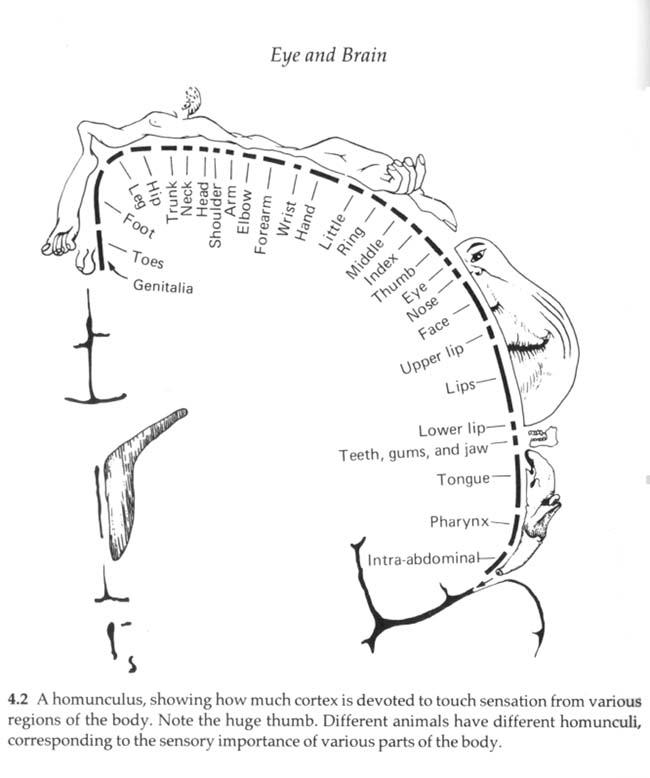 A Timeline of Neuroscience
